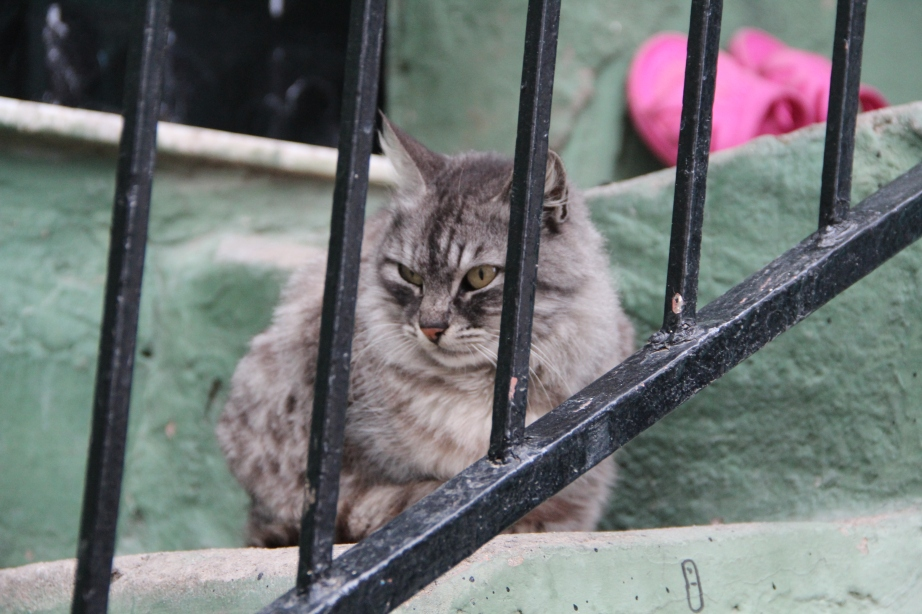 This cat was so grumpy I had to snap a photo. Tee hee.
