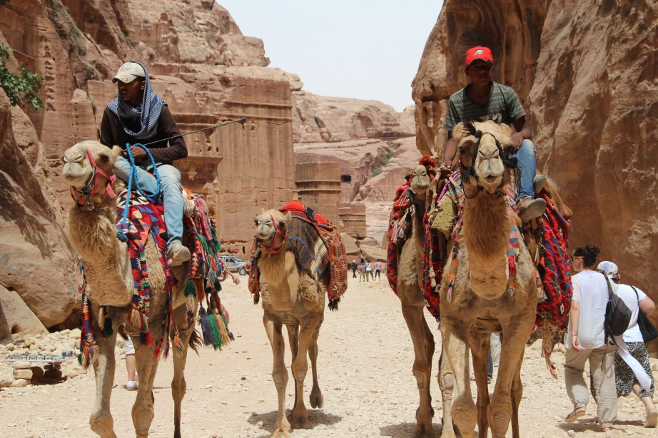 Charging camels in Petra.